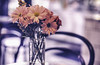 Red Carnations (uselessbay) Tags: 2017 atlanta epsonperfectionv600 georgia kodakektochrome uselessbayphotography film flowers nikonf4 stilllife uselessbay