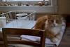 subdued light (rootcrop54) Tags: jimmy orange ginger tabby male companion dishdrainer hillbilly restaurantchina neko macska kedi 猫 kočka kissa γάτα köttur kucing gatto 고양이 kaķis katė katt katze katzen kot кошка mačka gatos maček kitteh chat ネコ