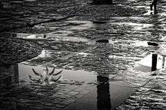 ... (ángel mateo) Tags: ángelmartínmateo ángelmateo cádiz andalucía españa andalusia spain amanecer dawn sunrise paseando agua reflejos chaco luz empedrado palmera strolling water reflections light paved palm tree