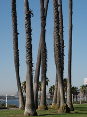alien elephants (..Lana..) Tags: beach california longbeach losangeles seafront