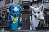 DSC_0036 (BerionHusky) Tags: fursuit mascot costume monschau furry fur