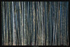Bamboo Screen (Ilan Shacham) Tags: abstract repetition lines shape form landscape scenic bamboo trees fineart fineartphotography texture arashiyama kyoto japan