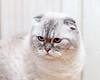 BBI_2945- (pavelkalin) Tags: cat canon 1dx markii ef 85mm f14l is usm ngc