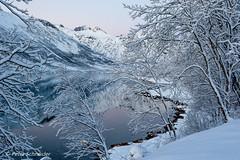 Winter in Norway (Petra Schneider photography) Tags: tromsfylke norge norway northernnorway winter winterstimmung winterday snow wintermood