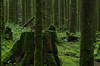 Unfamiliar Path (Kristian Francke) Tags: forest outdoors nature bc canada pentax green tree trees