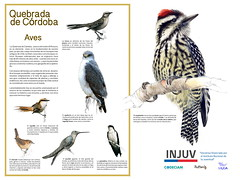 Quebrada de Co¦ürdoba-AVES 3