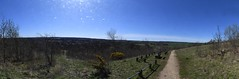 Shireoak woodland vieworama (Roger Bunting) Tags: hugin panorama shire worksop