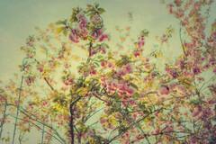 Primavera, abrázame... by M & Pi - enmaráñame, envuélveme,  méceme... Ansío tanto perderme en tus brazos...