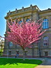 Strasbourg 034 (molaire2) Tags: strasbourg estrasburgo printemps primavera spring 2018 fleur cigogne orangerie arbre
