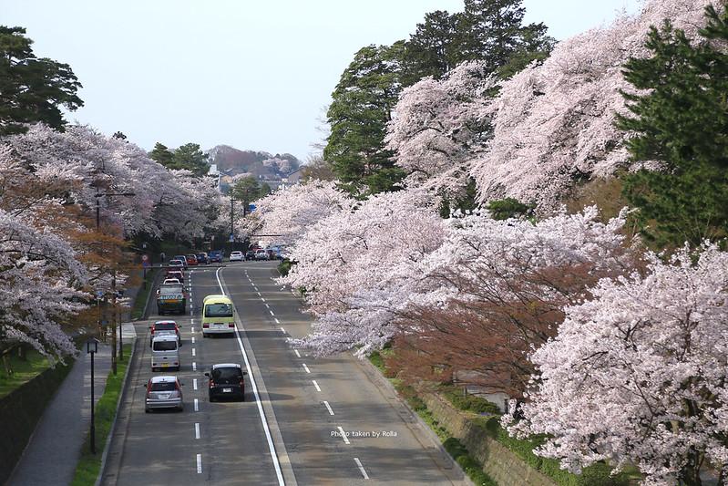 日本中部北陸自駕|使用CEP,追逐滿開櫻花。
