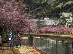 Andorra leisure: Andorra la Vella, Andorra city, the center, Andorra (lutzmeyer) Tags: 90mm andorra andorralavella andorracity europe iberia iberianpeninsula lutzmeyer passatgedevalira pirineos pirineus pyrenees pyrenäen riuvalira abril april baumblüte bild capital center centre city ciudad ciutat fluss foto fotografie frühjahr frühling fussweg hauptstadt iberischehalbinsel image imagen imatge lutzlutzmeyercom mfmediumformat photo photography picture primavera riu river rural sonnenaufgang sortidadelsol spring springtime stadtgebiet sunrise town