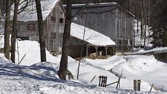 Solitaire (Luc Marc) Tags: hiver neige sainteannedeslacs bâtimentagricole animal cheval steannedeslacs québec âne
