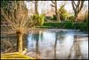 Water -2- (Jan 1147) Tags: water ice bevroren tree trees boom bomen spiegeling weerspiegeling reflection nature natuur depinte belgium