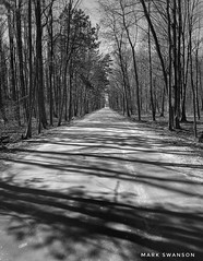 Road of Shadows (mswan777) Tags: iphone iphoneography apple stevensville white black monochrome ansel texture landscape nature outdoor michigan winter sun shadow straight dirt road tree wood forest