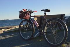 The old Hardrock at Esquimalt Lagoon (pnwrovr) Tags: specialized hardrock commuter steelbike retro bikebasket commuterbike cycling singlespeed 26 mtb 90svintage 1994mtb chromoly
