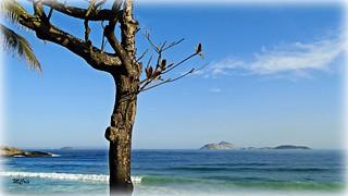 Praia de Ipanema... MCris