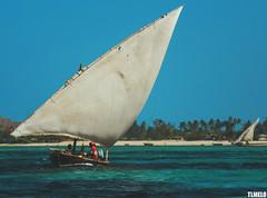 Zanzibar - Tanzania - Africa (TLMELO) Tags: beach ocean indianocean mar oceano barco boat zanzibar tanzania sunset mergulho salto dive jump swiming nadador shadow sombra