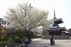 18o2755_1920x1280 (kimagurenote) Tags: 護国寺 gokokuji temple 桜 sakura prunus cerasus cherry blossom flower 東京都文京区 bunkyotokyo bunkyōtokyo