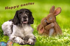 Happy Easter (Flemming Andersen) Tags: easter påske dog egg rabitt