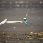 Kingfisher Landing thumbnail