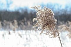 2018-03-30 (Jacob L('U)) Tags: winter spring vinter vår sweden sverige nature landscape lake water ski skiis skiing sports train excersise grass ice river snow