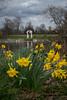 Henry Moore's Arch and Daffodils (Ms. Jen) Tags: 2018 50mm 50mmlens d850 england henrymoore henrymooresculpture kensingtongardens london march2018 march26th nikon50mmf14glens nikon50mmlens nikond850 photobyjeniferhanen thearch thelongwater uk art daffodil daffodils flowers lake msjencom photowalk publicart sculpture spring water unitedkingdom gb