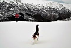 turgåere! (KvikneFoto) Tags: vinter winter snø snow bokeh åsta