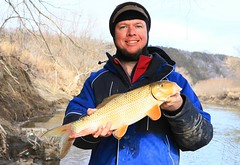 silver redhorse along Upper Iowa River IA 854A7199 (lreis_naturalist) Tags: silver redhorse catch release master angler award winner upper iowa river allamakee county larry reis