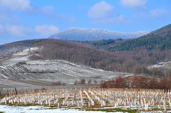 Vignes et forêts  -  Vineyards and forests (Philippe Haumesser Photographies (+ 5000 000 views) Tags: paysage paysages landscape landscapes montagne montagnes mountain mountains forêt forêts forest forests vine vines vineyard viveyards vigne vignes vignoble neige snow hiver winter alsace elsass france hautrhin 68 nikond7000 nikon d7000 reflex 2018 arbre ciel champ