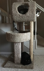 20180412:  The girls like their cat tower. (lamarstyle) Tags: lamarstyle lamarstylepblamar 2018 iphone iphone6s 365days iphone365 visualdiary cats cattower