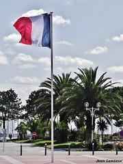 Royan - Place Charles de Gaulle (JeanLemieux91) Tags: tricolore drapeau bandera flag palm tree palmier palmera phoenix canariensis canaries charentemaritime poitoucharentes france europe mars march marzo hiver invierno winter royan