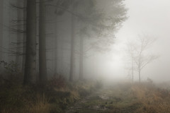 Pathway (www.neilburnell.com) Tags: trees landscape mood moody atmosphere mist fog misty foggy neil burnell wwwneilburnellcom