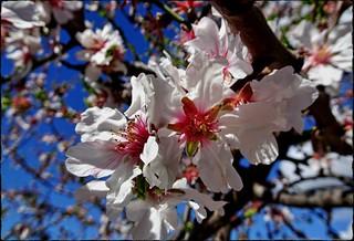 Spring | Frühling [explored]