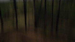 Forests of El Hiero ([Alan]) Tags: intentionalcameramovement icm blur forest wood tree colour color spain canary island el hiero