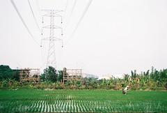 (YL.H) Tags: agfa vista analog film canon 500n 底片 taiwan 鶯歌 farmland