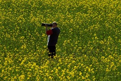 The photographer!!! (Renata1109) Tags: raps mensch fotograf photographer outdoor acker feld bayern mann deutschland gelb grün green yellow natur sichtweise sichtpunkt blume