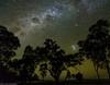 starry night (andrew.walker28) Tags: stars milky way carina nebula milkywayandlargemagellaniccloud trees long exposure starscape night sky leyburn queensland australia