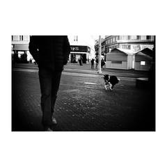 zagreb (s_inagaki) Tags: industar69 monochrome walking ザグレブ dog bnw 朝 street oldlens モノクロ 白黒 bw 散歩 vintagelens blackandwhite スナップ 犬 morning croatia オールドレンズ クロアチア snap zagreb