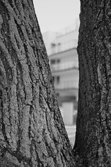 DSCF0845 (adammendyk) Tags: xpro1 35mm f20 fujinon fujifilm warszawa wilanow polska digital