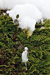 Photos Marco BP (43)_GF (marcbihanpoudec) Tags: bretagne neige plabennec plan deau lac banc arbres blanc stalactite sousbois