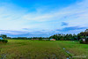 A beautiful morning in my native village! (CuriousClickZ) Tags: sunnyday outdoor nature beauty photography green village landscape grass field beautiful blue morning sky