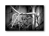 He will receive by its fruits (Terra Lyusi) Tags: nikond40 bokeh monochrome blackandwhite autumn bunch liana