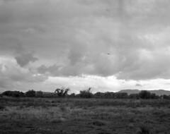 Nubes con agua (oscam.cl) Tags: koniomega konica hexanon 90mm ilford hp5 expirado rodinal 150 formatomedio