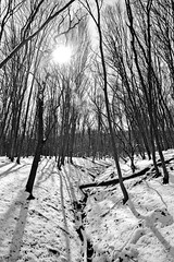 Forest lights... (lupuszka) Tags: monochrome blackandwhite bw woods trees landscape landscapes nature snow snowy cold winter frost frozen sun sunlight star forest woodland tree analog film neopan acros neopanacros transylvania romania mures
