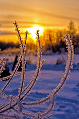 A Frosty Start to the Day !! (Bob's Digital Eye) Tags: april2018 bobsdigitaleye canon canonefs1855mmf3556isll flicker flickr frost h2o hoarefrost spring sunrise t3i laquintaessenza sky snow cold backlit