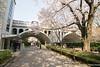 Otonashi Water Park (takashi_matsumura) Tags: otonashi water park oji kitaku tokyo japan nikon d5300 sakura cherry blossoms spring ngc afp dx nikkor 1020mm f4556g vr 音無川親水公園