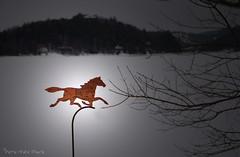 Trotteur pivotant ... ( P-A) Tags: cheval trotteur fier artisanat art métal artiste hiver wakefieldquébec rivièredelagatineau photos simpa©