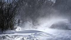Winterspaziergang; Bergenhusen, Stapelholm (31) (Chironius) Tags: stapelholm bergenhusen schleswigholstein deutschland germany allemagne alemania germania германия niemcy schnee frost