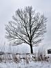 20180318-140821 (aderixon) Tags: naturelandscapehill natureplanttree natureweathersnow pontypridd midglamorgan walesuk nature snow weather