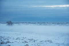 Snowy Morning 01 (tonymartinphotography) Tags: snow weather cold winter fog overcast town mist field